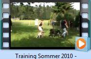 Video_Hundetraining